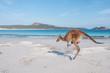 canvas print picture - Känguru mit Jungem hüpft an australischen Strand