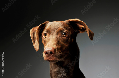 Foto op Plexiglas Hond Portrait of an adorbale mixed breed puppy