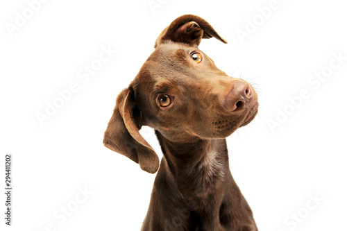 Photo Portrait of an adorbale mixed breed puppy