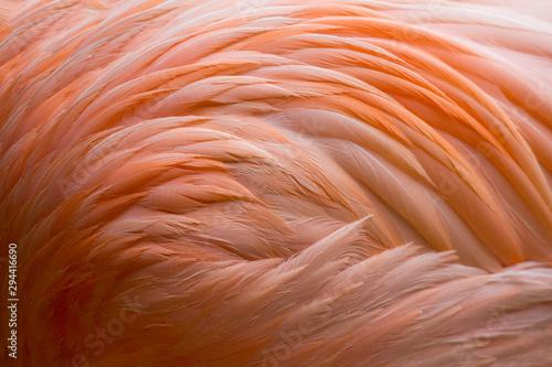 Garden Poster Flamingo Flamingo-Gefieder (Federkleid)