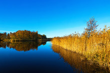Glassy Lake With Reedbed In Autumn Landscape