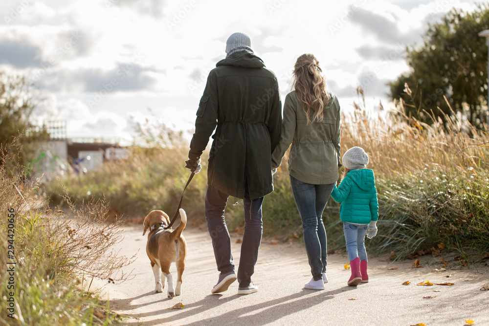 Fototapeta family, pets and people concept - happy mother, father and little daughter walking with beagle dog in autumn