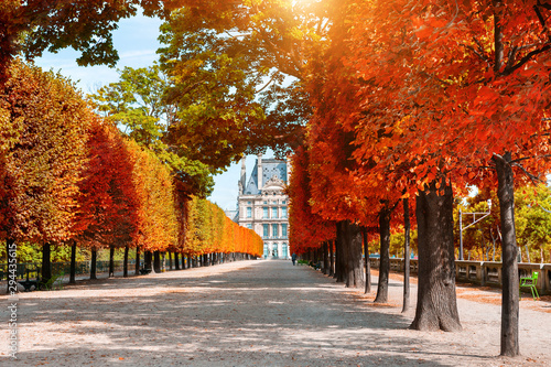 Yellow autumn trees in Tuileries Garden near Louvre in Paris, France Poster Mural XXL