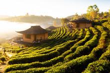 Sunrise At Lee Wine Rak Thai,Ban Rak Thai A Chinese Settlement, Mae Hong Son, Thailand