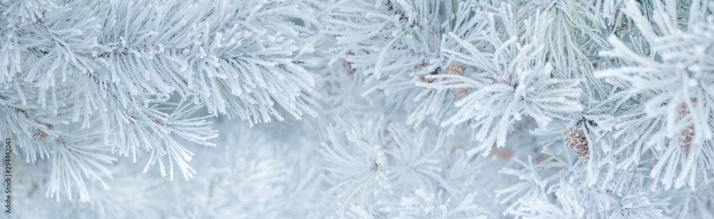 Fototapety, obrazy: Panoramic Nature Winter background with snowy pine tree