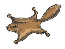 Flying Squirrel Animal Sketch ...