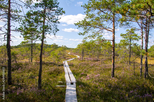 Wooden walkway and view of The Torronsuo National Park, Finland Wallpaper Mural