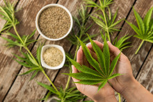 Hemp Leaves And Seeds From Abo...