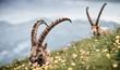 canvas print picture - Wildlife 265