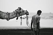 Man Near Camel