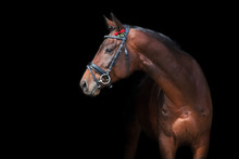 Beautiful Horse Portrait On Black Background