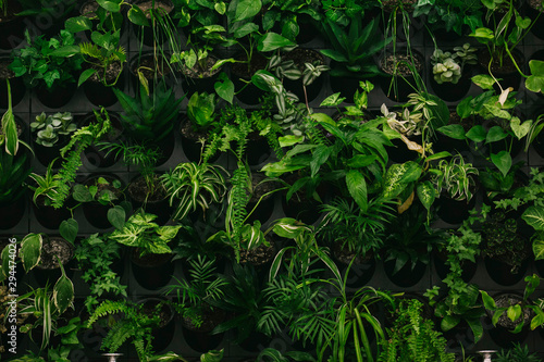 Background of many flowerpots attached to the wall Wallpaper Mural