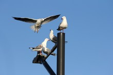 Low Angle Shot Of Seagulls Sit...
