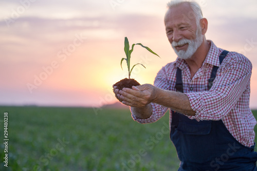 Cuadros en Lienzo Farmer holding young corn with soil in hands