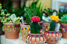 Cactus Breeding. Beautiful Red And Yellow Cactus Flowers In Ceramic Pots In Mexican Style. Garden And Planting Store Centre. Selective Focus, Copy Space.