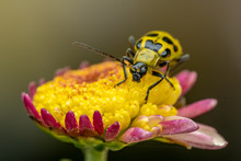 Closeup Of An Insect On A Flower In The Garden
