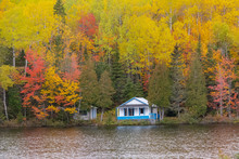 Cottage In The Forest On The L...