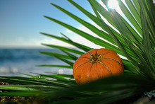 Halloween Pumpkin On A Palm Leaf On The Wet Stones Of The Sea Coast. The Symbol Of The Harvest