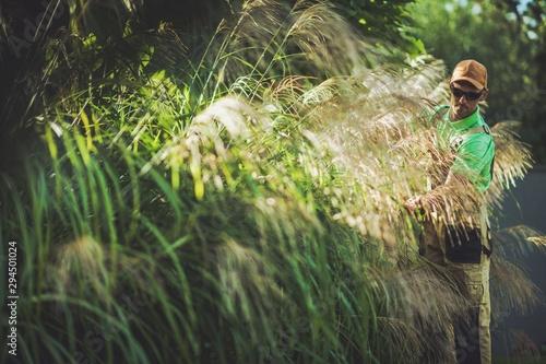 Garden Ornamental Grasses