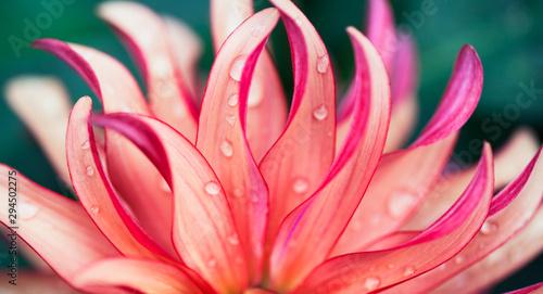 Fototapeta Pink Flower Macro obraz