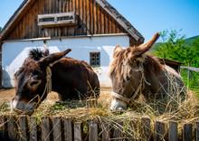 View On Donkeys On A Sunny Day