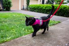 A Black Cat On A Leash Wearing...