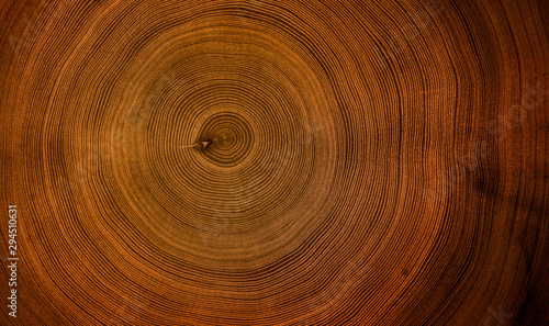 Old wooden mahogany tree cut surface. Detailed warm dark brown and orange tones of a felled tree trunk or stump. Rough organic texture of tree rings with close up of end grain.