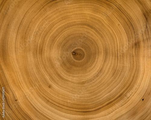 Obraz na płótnie Organic natural tree cut surface