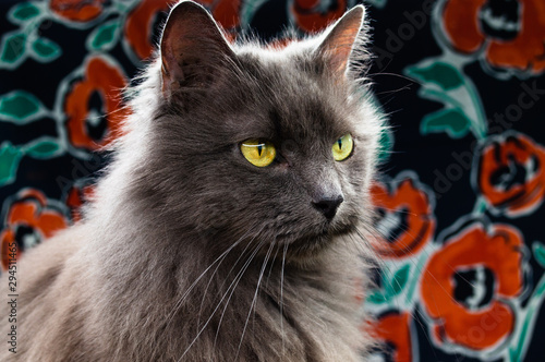 Grey Cat Portrait with Floral Backdrop 2