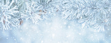 Soft Winter Christmas Background With Snowy Pine