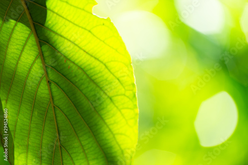 Foto auf Gartenposter Gelb Green blurred background. Green bokeh out of focus foliage background.