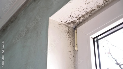 Mold growth Fototapet