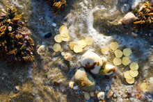 Treasure With Golden Coins By The Sea. Discovery, Treasure Hunting, Digging, Metal Detection Concept.