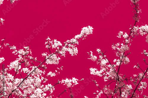 Floral abstract art on maroon background, vintage cherry flowers in bloom as nature backdrop for luxury holiday design