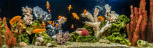 Freshwater Aquarium As Pseudo-...