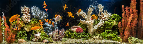 Freshwater aquarium as pseudo-sea. Aquascape and aquadesign. Fotobehang