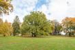 big tree in autumn park