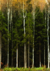 Fototapetamagic forest