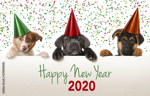 Happy new year puppies looking over a wall Canvas Print