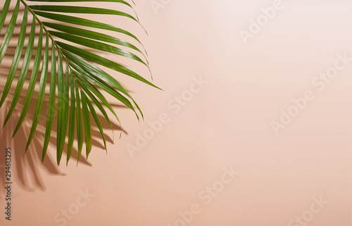 abstract palm leaf and shadow reflection on colorful background.