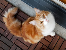 Curious Ginger Cat Looking Up At The Camera.