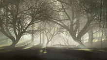 Mysterious Dark Haunted Forest With Last Sun Rays Shining Through Creepy Dead Trees Silhouettes At Misty Dawn Or Dusk. Fantasy Woodland Scenery 3D Illustration.