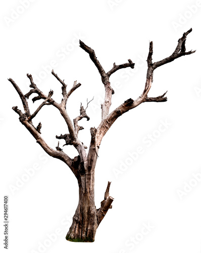 Dead tree isolated on white background with clipping path Wallpaper Mural