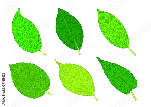 Green Leaves fresh abstract isolated on white background illustration vector Wallpaper Mural