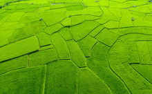 Aerial View Of Agriculture In Rice Fields For Cultivation In Nan Province, Thailand. Natural The Texture For Background