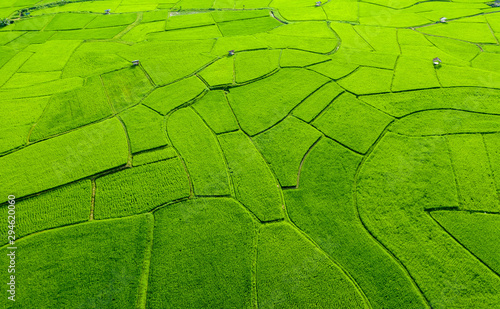 Wall Murals Rice fields Aerial view of agriculture in rice fields for cultivation in Nan Province, Thailand. Natural the texture for background