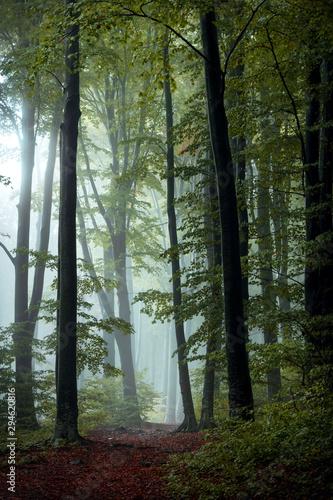 Foto auf Acrylglas Wald im Nebel Fairy tale trail in autumn foggy forest. Strange mist in the woods