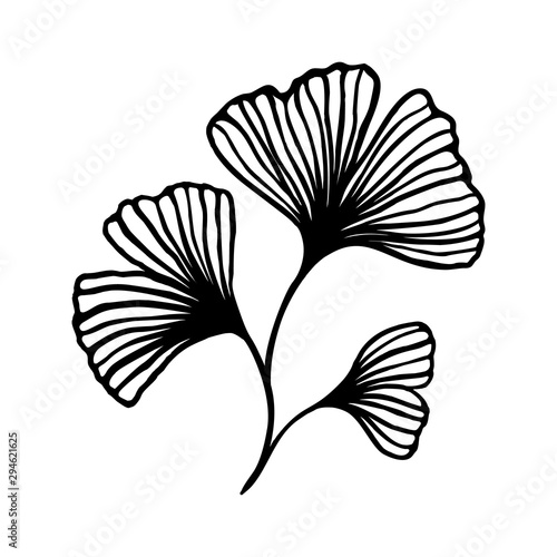Fototapeta Ginkgo biloba branch with leaves hand drawn contour line. Vector Floral art in a Trendy Minimalist Style. For the design of Logos, Invitations, posters, Postcards, prints on t-Shirts. obraz na płótnie