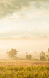 canvas print picture - Picturesque landscape of grassland in the morning mist.