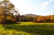 Autumn forest and meadow nature. Vivid morning in colorful forest with field. Scenery of nature with sunlight